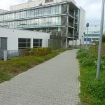 Picture showing the path leading to the chemistry building